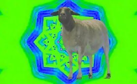 A slim, not too fat sheep moving her head to electro house music, she seems pretty happy moving on clouds of psychedelic light that make you stare.